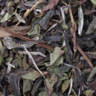 1837 White Tea
